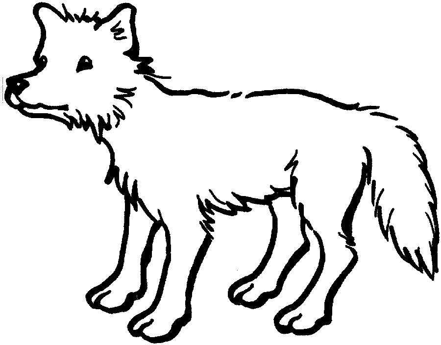 coyote pictures coloring pages - photo#27