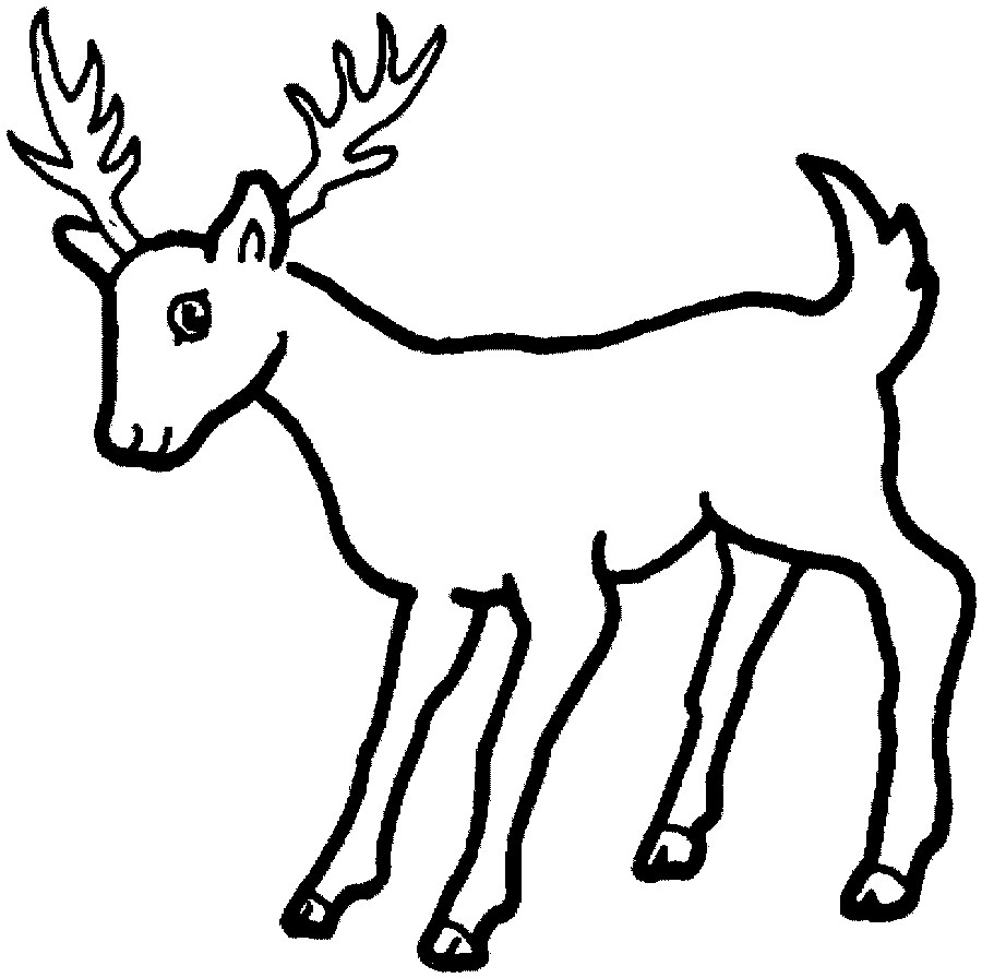Coloring pitchers of animals - Bear Deer Puppy Elephant