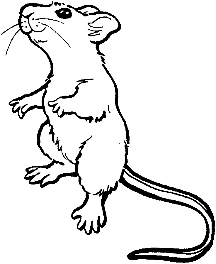 Land animals to color for Rat coloring pages